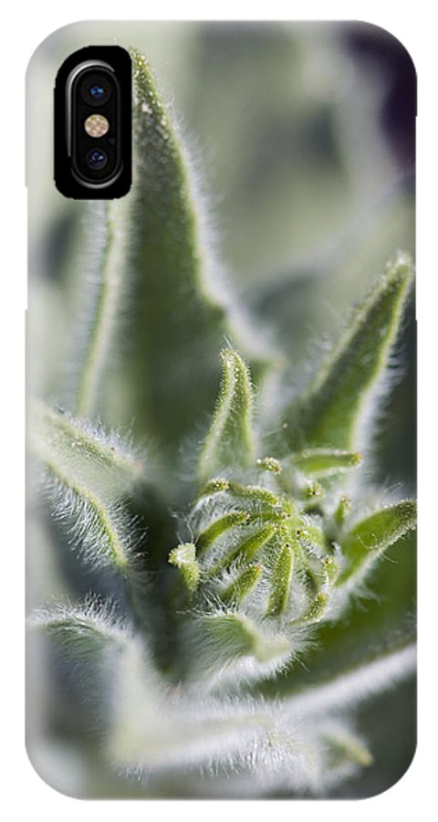 Detail IPhone X Case featuring the photograph Desert Sunflower Geraea Canescens Bloom by Rich Reid