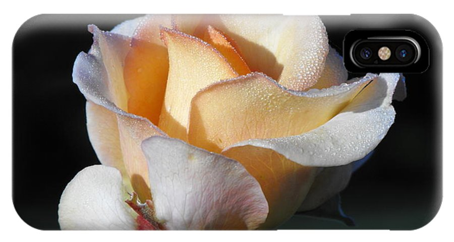 Rose IPhone X Case featuring the photograph Dew On Rose by Marlene Challis