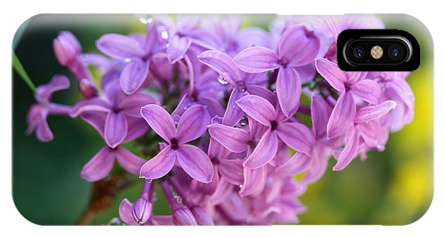 Flowers IPhone X Case featuring the photograph Dewdrops On Lilacs by Diana Haronis