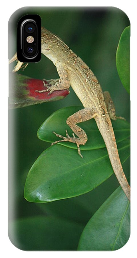 Lizard IPhone X / XS Case featuring the photograph Dinner Time by Mandy Shupp