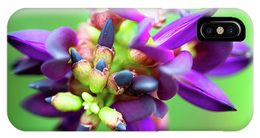 Violet IPhone X Case featuring the photograph Divine Purple by Pam Fong