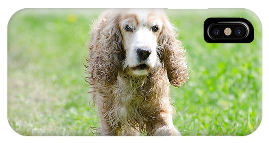 Dog IPhone X Case featuring the photograph Dog On The Green Field by Mats Silvan