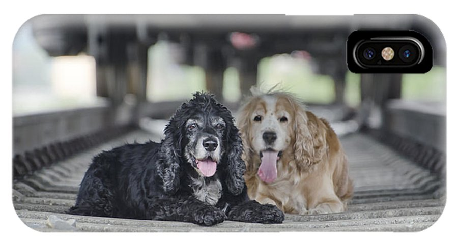 Dogs IPhone X Case featuring the photograph Dogs Lying Under A Train Wagon by Mats Silvan