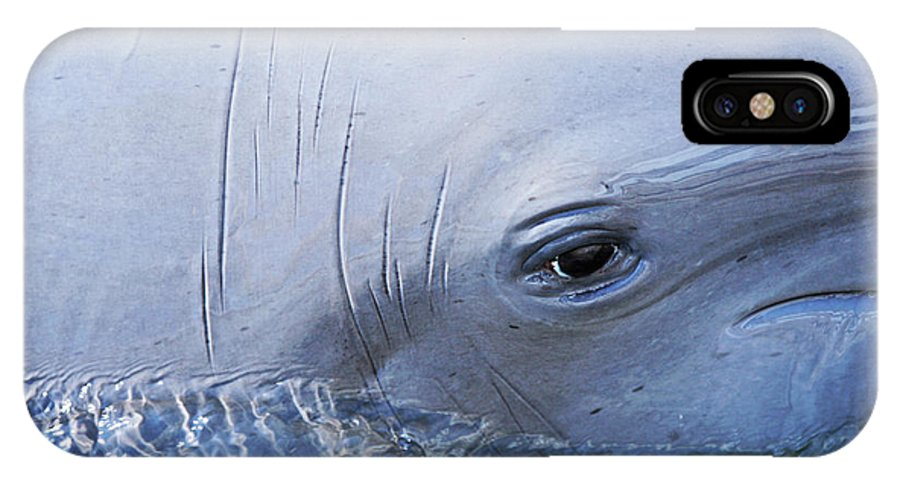 Dolphin IPhone X / XS Case featuring the photograph Dolphin Eye Two by Ty Helbach
