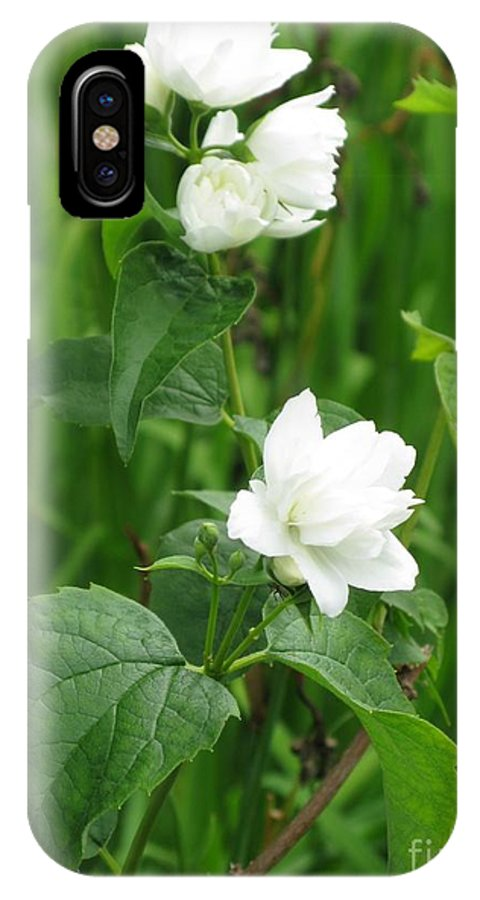 Jasmine IPhone X Case featuring the photograph Double Jasmine In Bloom by Ausra Huntington nee Paulauskaite