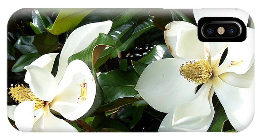 White Flowers IPhone X Case featuring the photograph Double Magnolia by Gwen Baptiste
