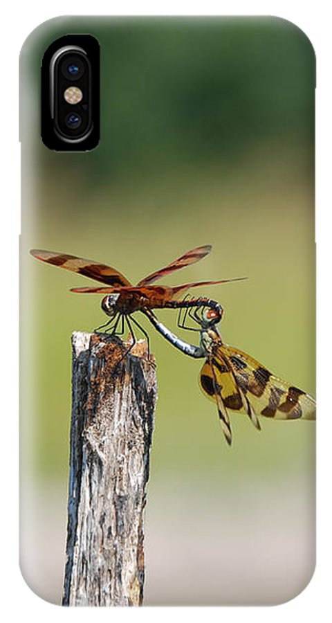 Kelly Rader IPhone X / XS Case featuring the photograph Dragon Fly Love by Kelly Rader