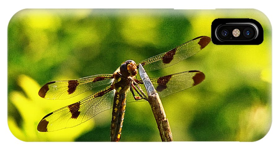 Dragonfly IPhone X Case featuring the photograph Dragonfly In Green by Susan Capuano