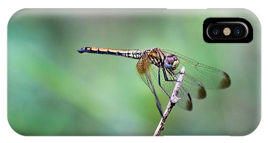 Solitary IPhone X Case featuring the photograph Dragonfly by Saurav Pandey