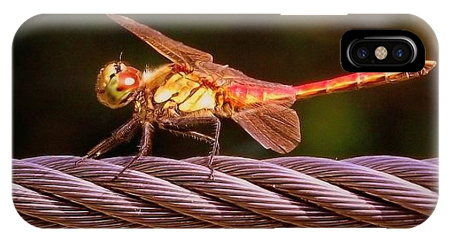 Dragonfly IPhone X Case featuring the photograph Dragonfly by Shawna Gibson