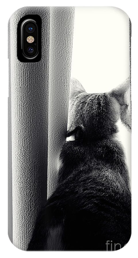 Cat IPhone X Case featuring the photograph Dreamer by Pam Holdsworth