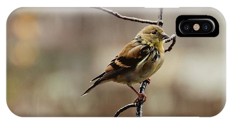 Finch IPhone X Case featuring the photograph Drenched Finch by Cheryl Baxter
