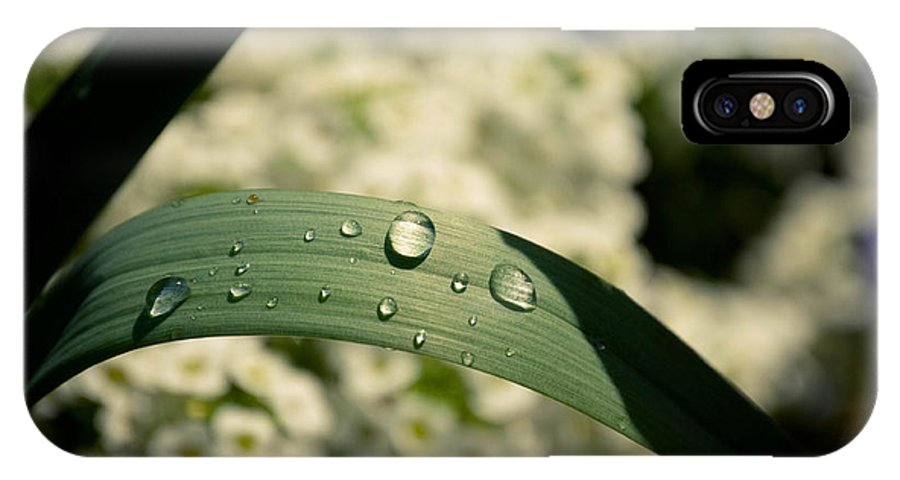 Leaves IPhone X Case featuring the photograph Droplets by Trish Tritz