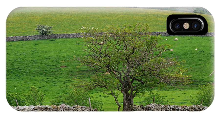Tree IPhone X / XS Case featuring the photograph Dry Stone Wall And Twisted Tree by Louise Heusinkveld