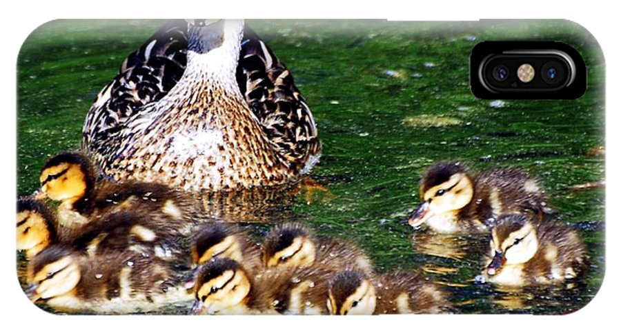 Duck IPhone X Case featuring the photograph Duck And Ducklings by Don Mann