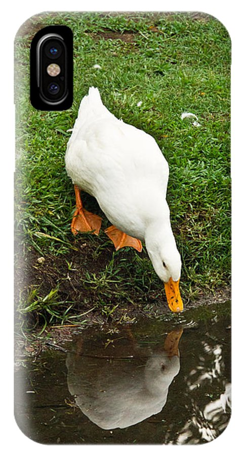 Duck IPhone X Case featuring the photograph Duck And Refection by Douglas Barnett