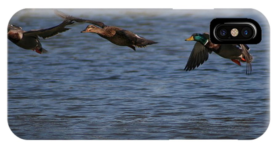 Ducks IPhone X Case featuring the photograph Ducks In Flight 1 by Sean Sweeney