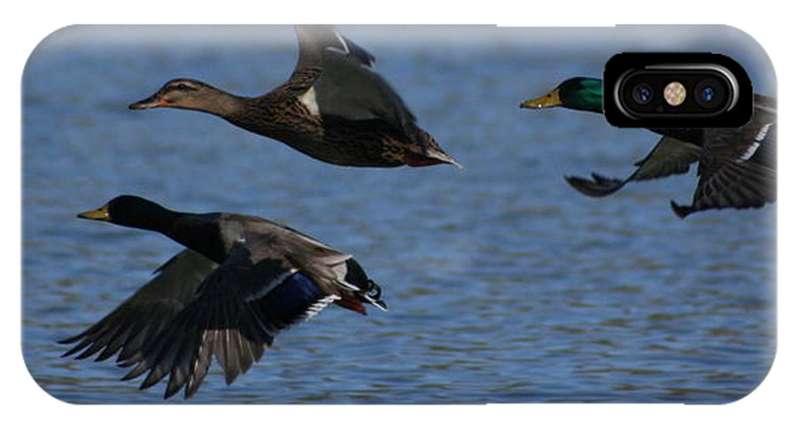 Ducks IPhone X Case featuring the photograph Ducks In Flight 3 by Sean Sweeney
