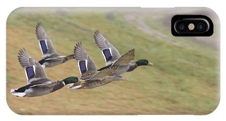 Ducks In Flight IPhone X / XS Case featuring the photograph Ducks In Flight V3 by Douglas Barnard