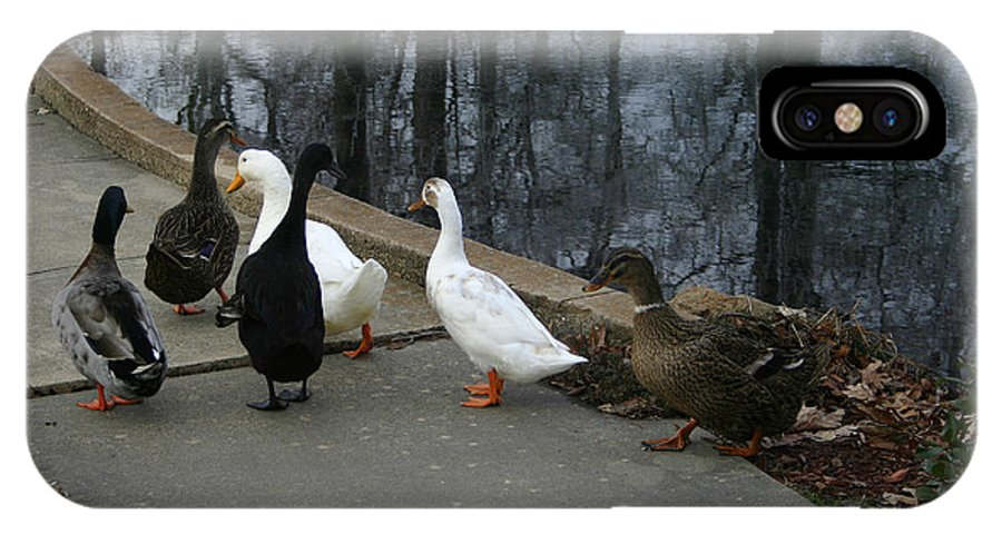 Duck IPhone X Case featuring the photograph Ducks On A Walk by Nina Fosdick