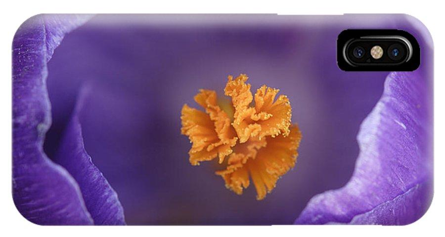 Fn IPhone X Case featuring the photograph Dutch Crocus Crocus Vernus Flower by Silvia Reiche