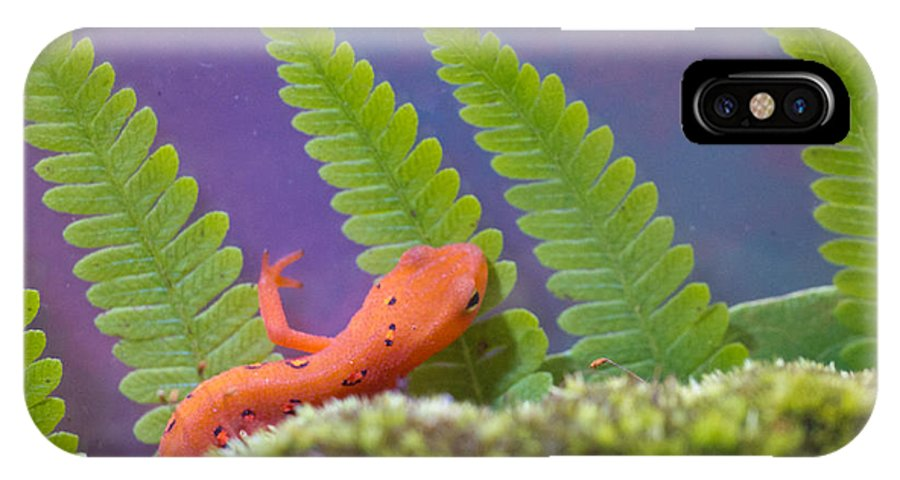 Newt IPhone X Case featuring the photograph Eastern Newt 1 by Douglas Barnett