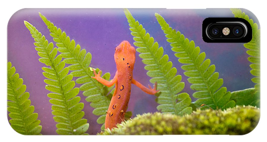 Newt IPhone X Case featuring the photograph Eastern Newt 2 by Douglas Barnett