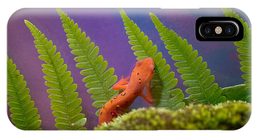 Newt IPhone X Case featuring the photograph Eastern Newt 7 by Douglas Barnett