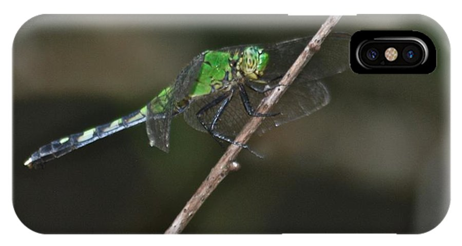 Common IPhone X Case featuring the photograph Eastern Pondhawk 8644 3276 by Michael Peychich
