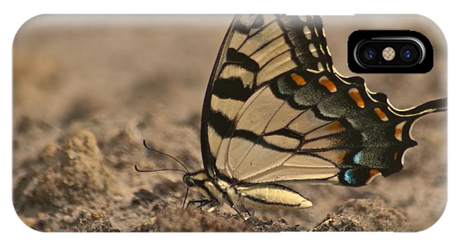 Adult IPhone X Case featuring the photograph Eastern Tiger Swallowtail 8542 3219 by Michael Peychich