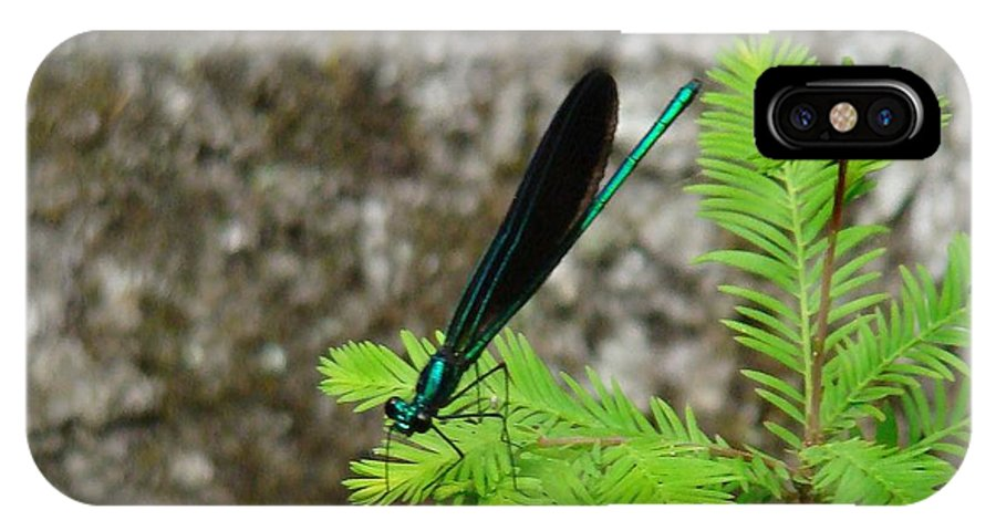Damselflies IPhone X / XS Case featuring the photograph Ebony Jewelwing Male by Bruce W Krucke
