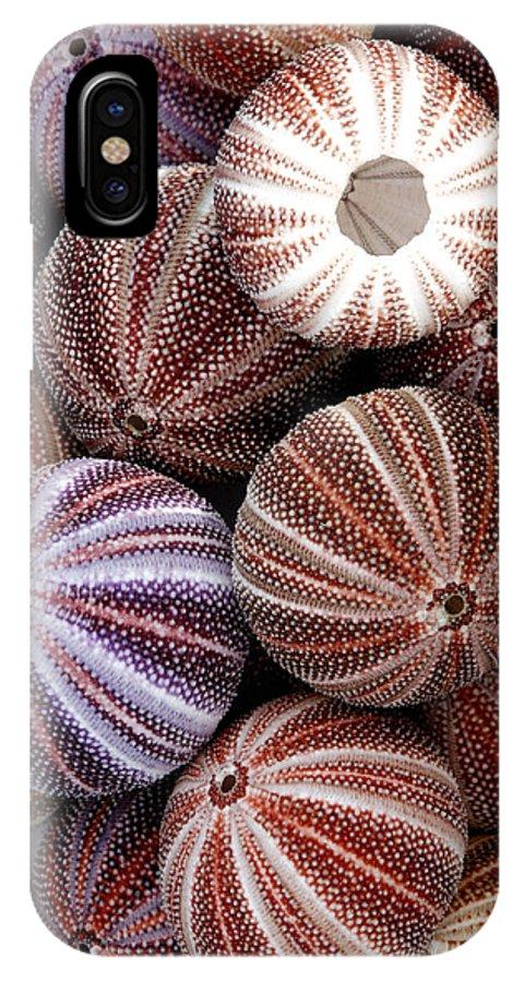 Echinus Esculentus IPhone X / XS Case featuring the photograph Edible Sea Urchin Souvenirs by Dr Keith Wheeler
