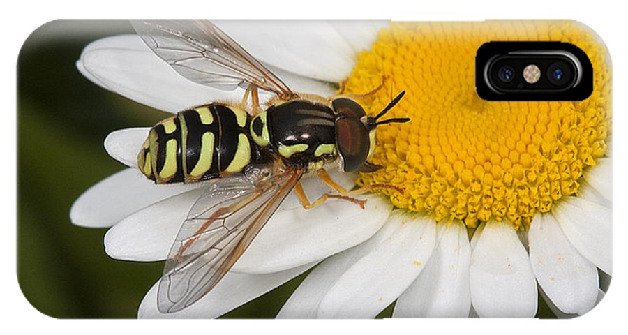 Hoverfly IPhone X Case featuring the photograph Elegant Hoverfly by Bob Kemp