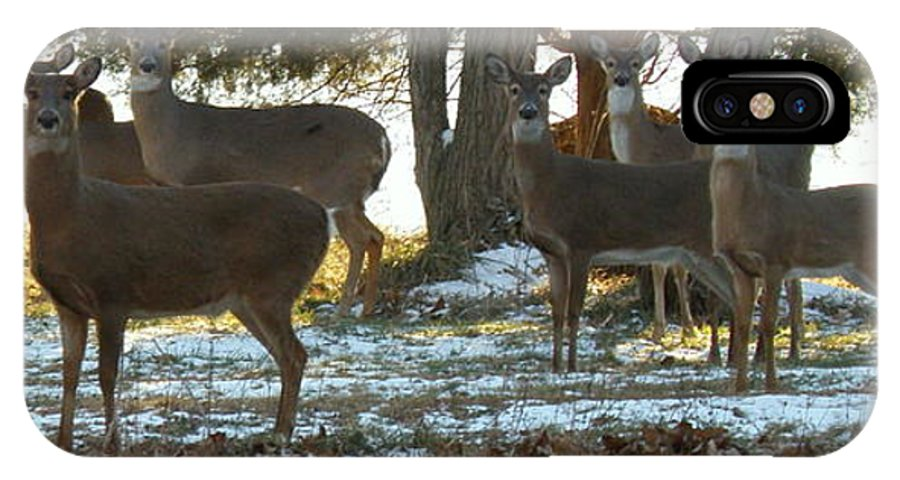 Deer IPhone X Case featuring the photograph Eleven Deer Standing by Lainie Wrightson