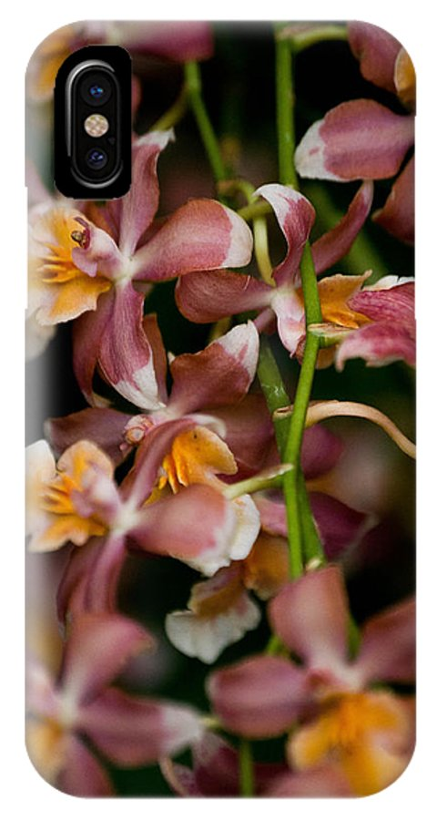 Flower IPhone X Case featuring the photograph Emma's Orchid by Trish Tritz