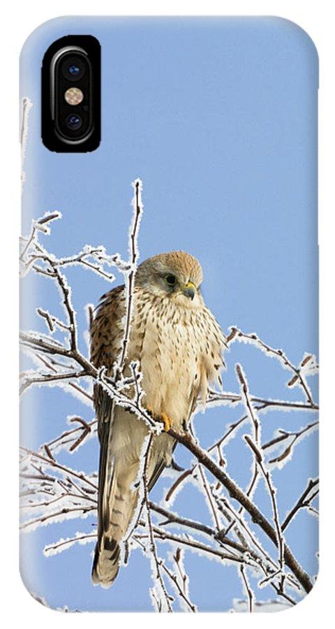 Mp IPhone X Case featuring the photograph Eurasian Kestrel Falco Tinnunculus by Konrad Wothe