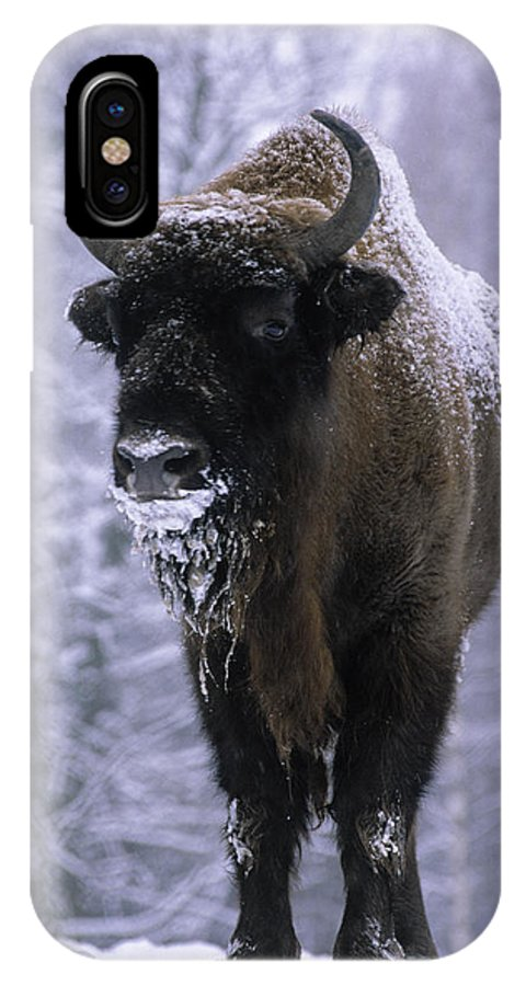 Fn IPhone X Case featuring the photograph European Bison Bison Bonasus In Snow by Rinie Van Meurs