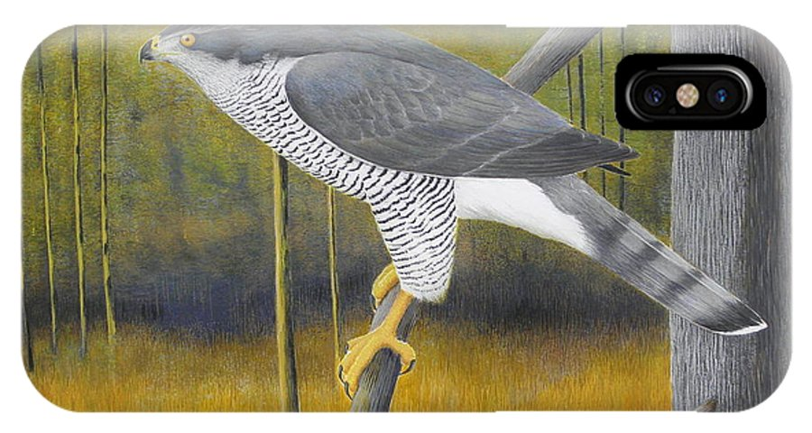 European Goshawk IPhone X Case featuring the painting European Goshawk by Alan Suliber