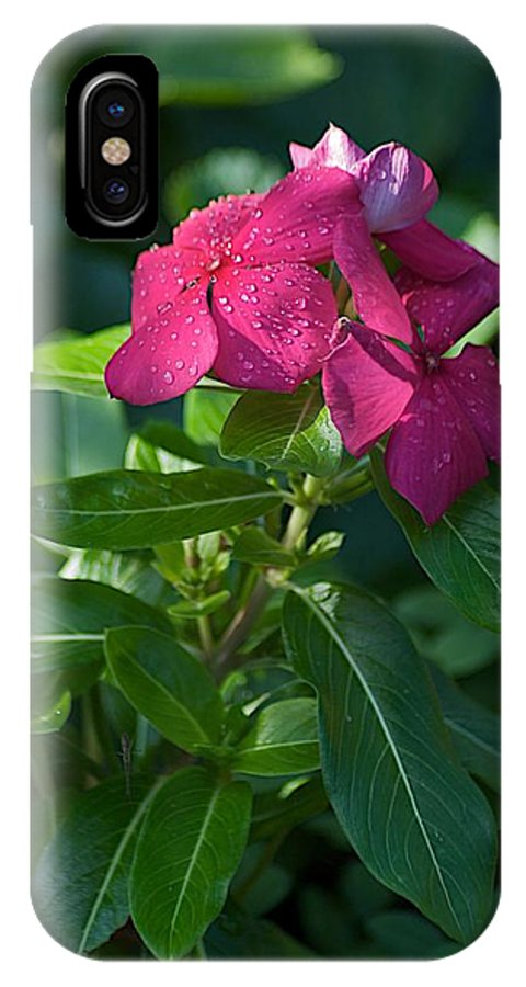 Flower IPhone X Case featuring the photograph Ever So by Joseph Yarbrough