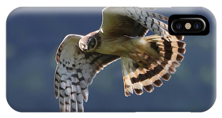 Hawk IPhone X Case featuring the photograph Eye Contact by Angie Vogel