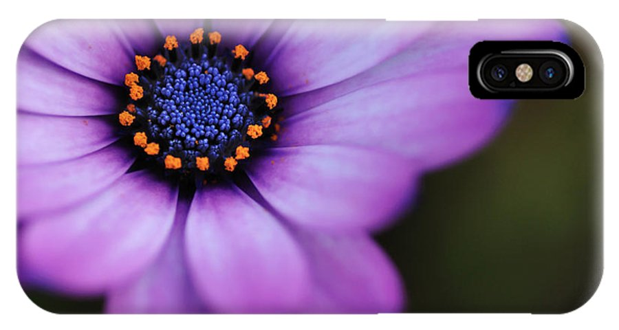 Photography IPhone X / XS Case featuring the photograph Eye Of The Daisy by Kaye Menner