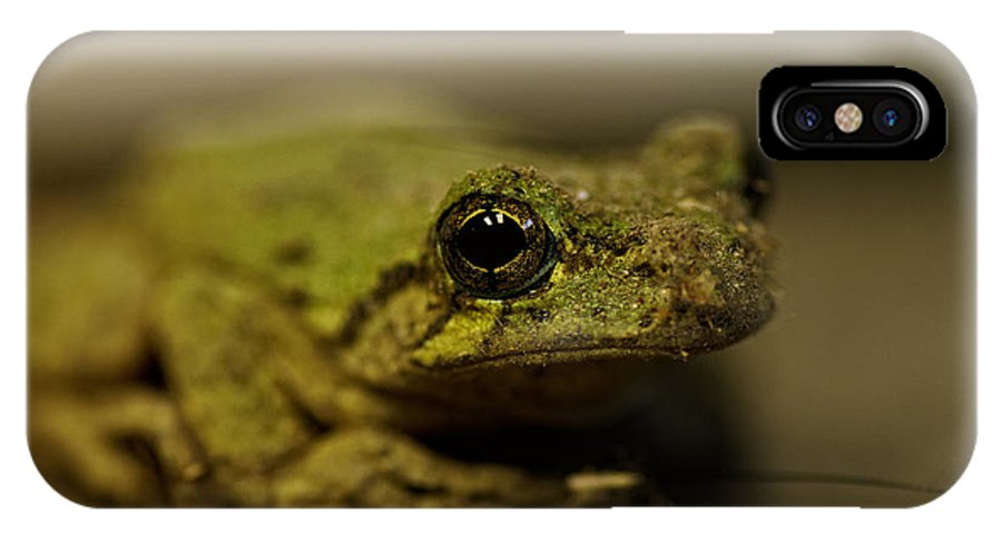 Frog IPhone X Case featuring the photograph Eye To Eye by Susan Capuano