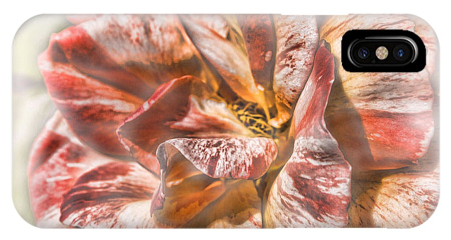 Flower IPhone X Case featuring the photograph Faded Glory by Jo-Anne Gazo-McKim