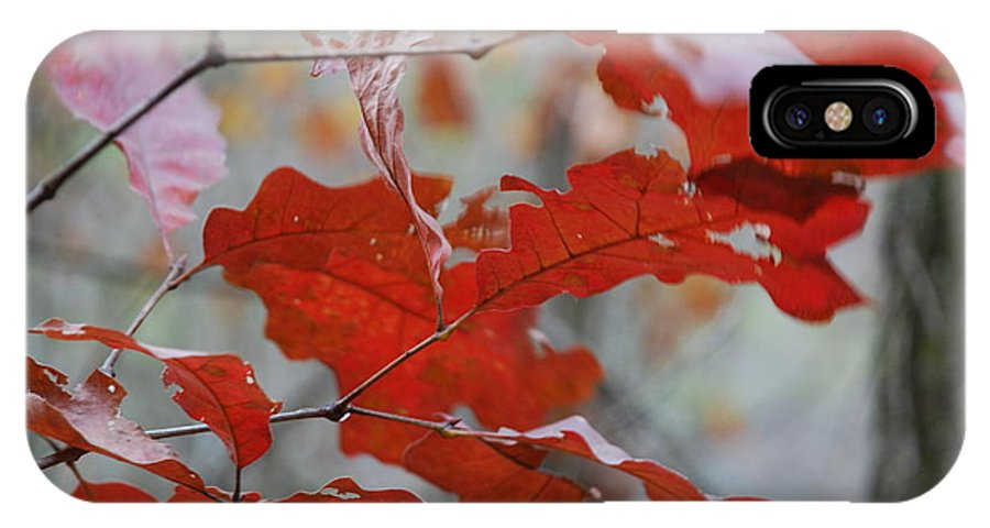 Leaves IPhone X Case featuring the photograph Fall by T Campbell