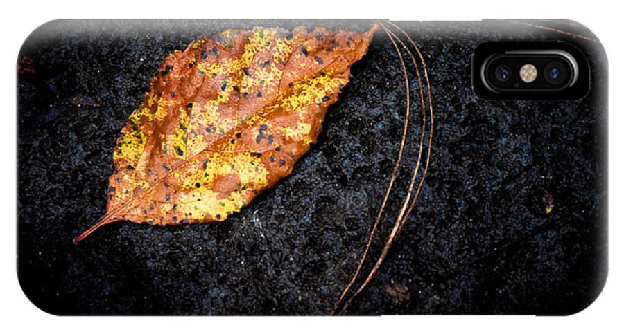 Leaf IPhone X Case featuring the photograph Fallen by Guy Hoffman