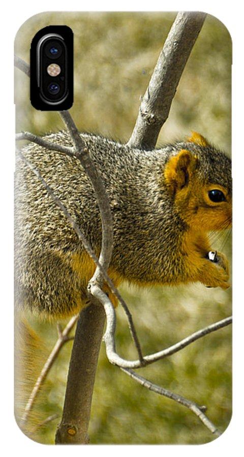 Usa IPhone X Case featuring the photograph Feeding Tree Squirrel by LeeAnn McLaneGoetz McLaneGoetzStudioLLCcom