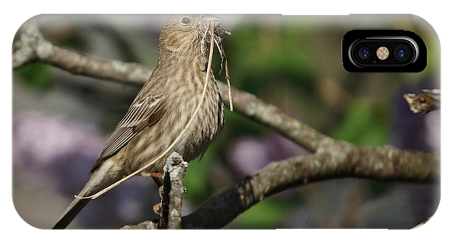 Female IPhone X Case featuring the photograph Female Finch by Alan Hutchins