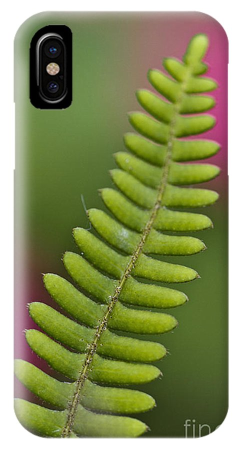 Heiko IPhone X Case featuring the photograph Fern Closeup by Heiko Koehrer-Wagner