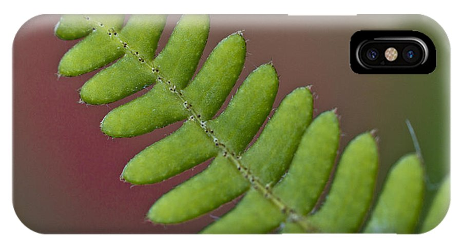 Heiko IPhone X Case featuring the photograph Fern Detail by Heiko Koehrer-Wagner
