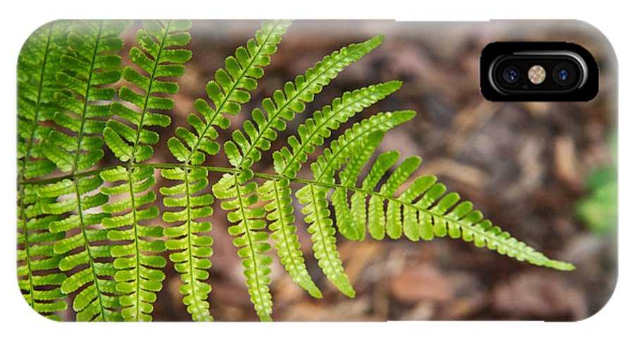 Fern IPhone X Case featuring the photograph Fern Frond 1 by Douglas Barnett